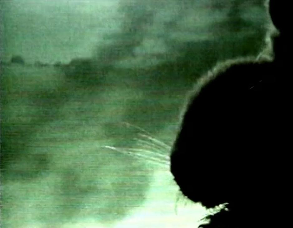 Immagine che contiene testo, silhouette, sfocatura  Descrizione generata automaticamente
